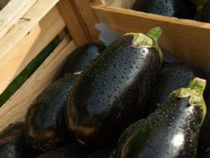Lose weight fast eggplant diet